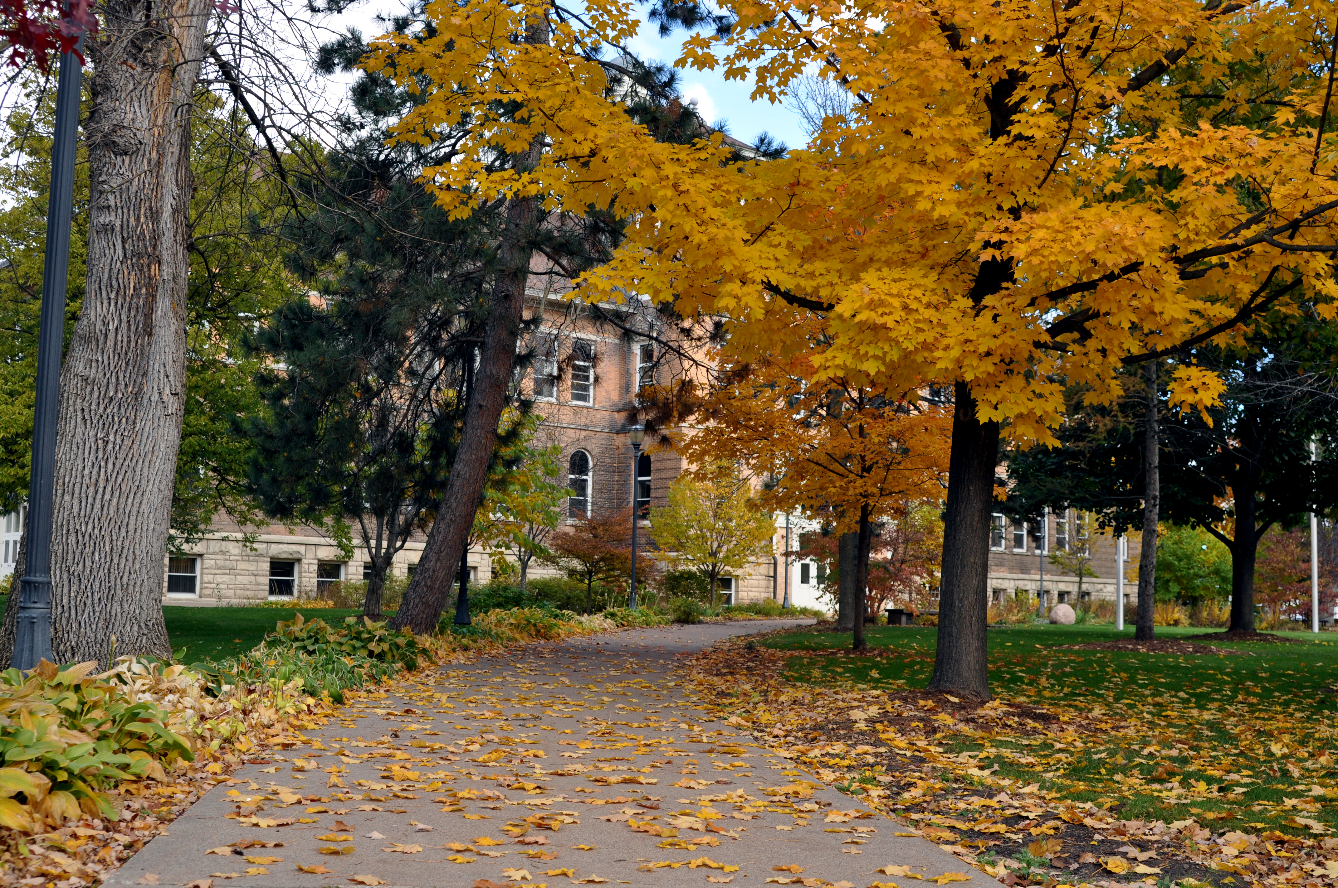 UWSP Adds 'Tree Campus USA' to List of Environmental Accolades