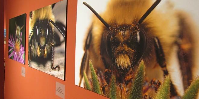 Macro-Photinsectographer Kicks Off 'Beyond the Hive'