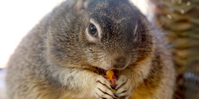 Obese Squirrel Sues Debot