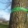 Emerald Ash Borer Found in Stevens Point