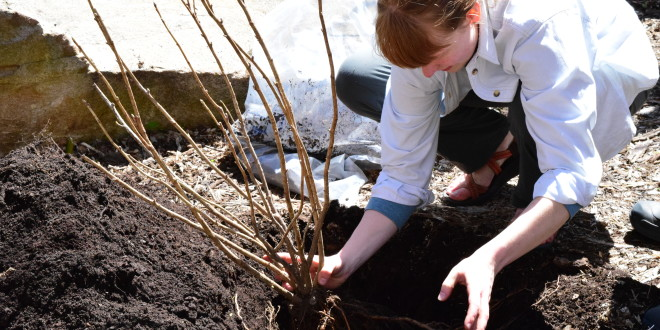 Two Green Thumbs Up Over Earth Week