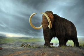 Exploring the Ethics of De-Extinction