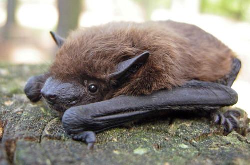 Wisconsin Welcomes New Bat Species