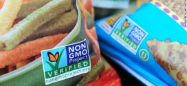 Have You Heard of Genetically Modified Foods?