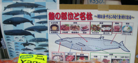 Japanese Whaling Spearheads International Controversy