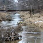 A look upstream. Photo courtesy of Dalen Dahl.