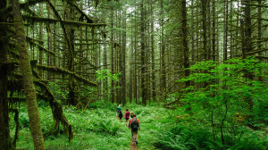"A group of hikers make their way through the forest. ""Hike"" by Loren Kerns is licensed under CC BY 2.0."
