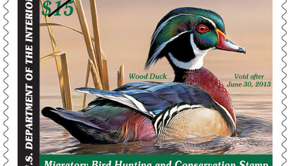 Art, Nature and Conservation Converge in Million Dollar Duck Documentary