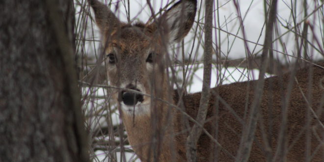 Carcass Tags No Longer Required for Deer Hunters