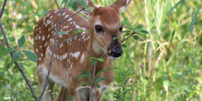 Hunters Should Be on High Alert for CWD