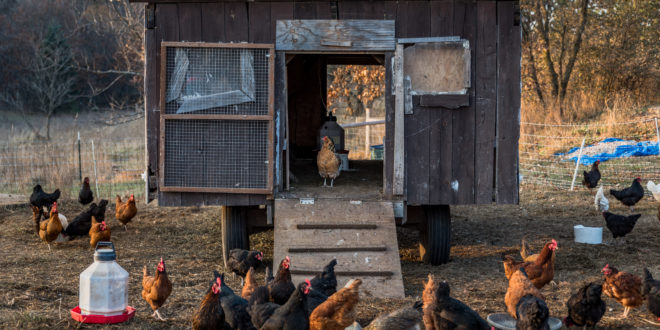 Liberation Farm Brings Meat, Eggs and Coffee to Stevens Point